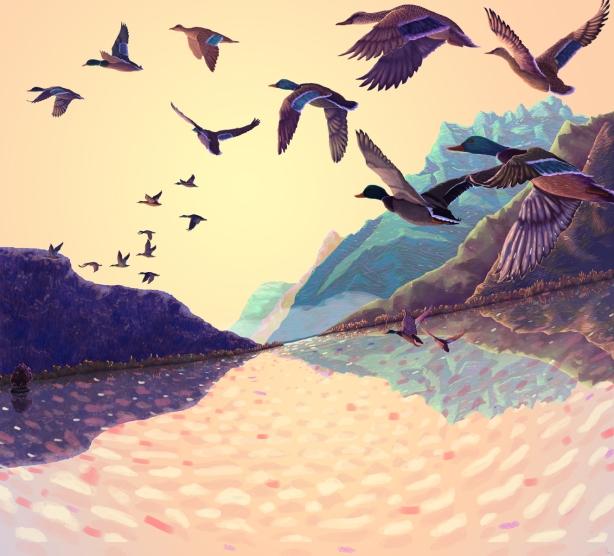 vol de canards
